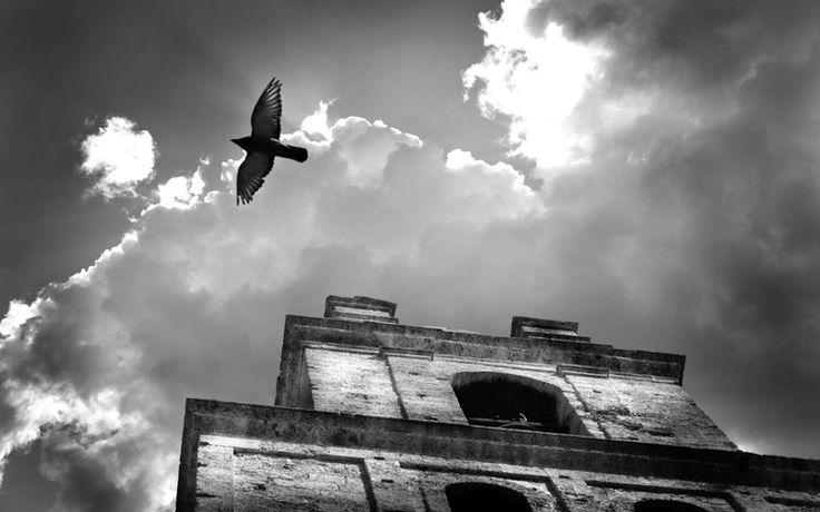 Diego Agurto | Signature Photography