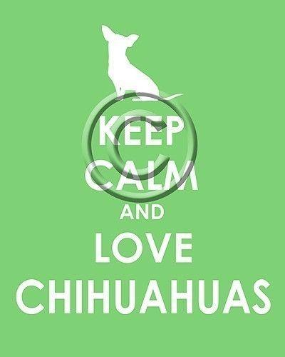 keep calm and love chihuahuas :) @Sarah Granville