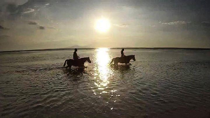 Hotels-live.com/pages/sejours-pas-chers - Just horsing around  _________________________ #bali #balilocal #love #travel #jetsetter #gilit #beautiful #summer #holidays #sun #bikini #pool #chasethesun #wanderlust #happydays #bliss #paradise #cocktails #thisisbali #love #inspo #ocean #beach #bucketlist #travelgram #horse #horsebackriding  by @sissieolivia Hotels-live.com via https://www.instagram.com/p/BEEx1UCnGRx/