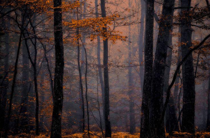 https://flic.kr/p/EyQfhh | Autumn colors!