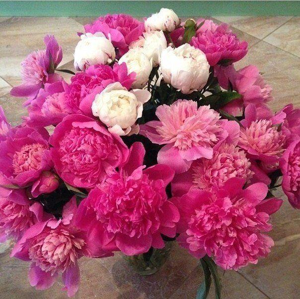 flowers, peonies