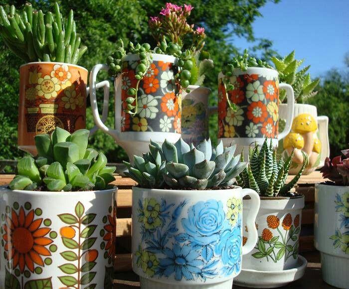 Suculentas en tazas plantas y jardines pinterest for Succulent dish garden designs