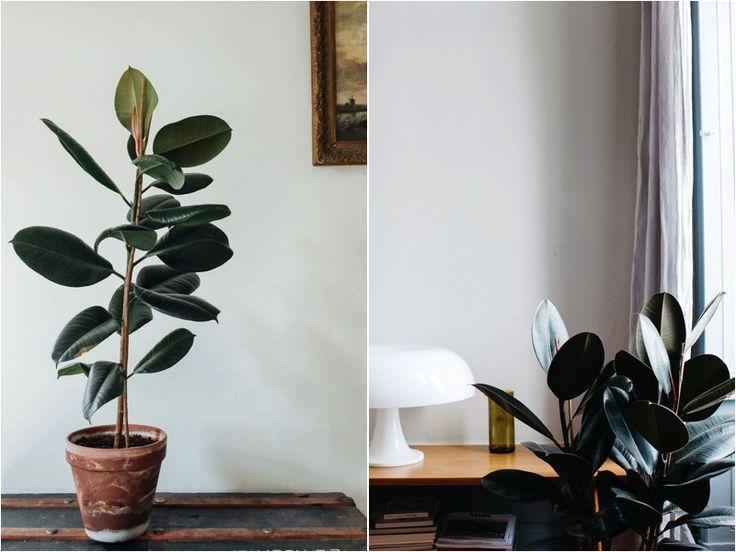 THE INDOOR PLANT BEGINNER'S GUIDE VOL. 2