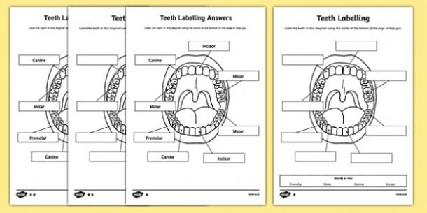 Tooth Labeling Worksheet In 2020 Worksheets Grade Pictures Grade 1