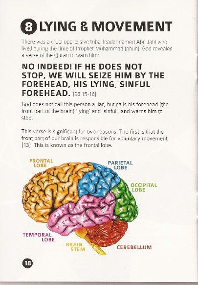 """Also, the frontal lobe is responsible for self control and the ability to """"think"""". Processing lies or truths originates in this part of the brain."""
