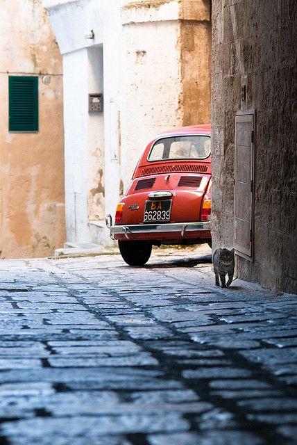 Le Marche ~ Italy, Katze unterwegs