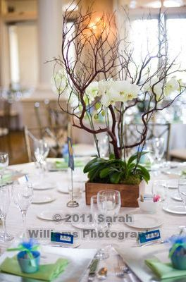 white orchid centerpiece with manzanita tree