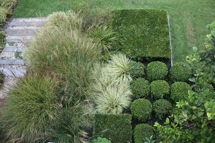 Contemporary garden lines punctuated with shaped boxed shrubs and giant Miscanthus grasses. Design by Franchesca Watson.