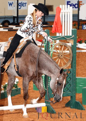 17 Best images about Trail Horse Training on Pinterest | Level 3, American quarter horse and World