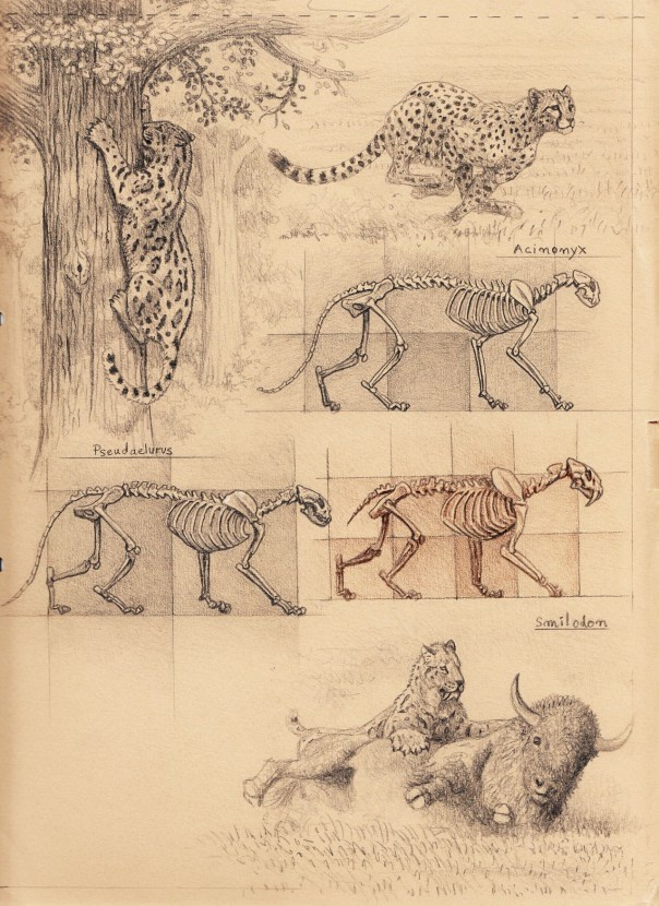 big cat skeleton proportions (150)