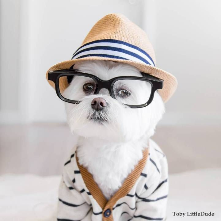 Meet Toby LittleDude, the Adorable Pup That Out-Hipsters Most Humans - My Modern Met