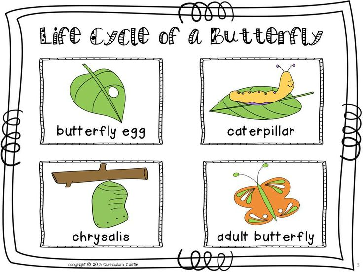 butterfly life cycle for preschool 4110 best images about preschool on 723