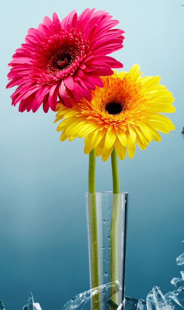 10 images about beautiful flowers wallpapers pictures pc