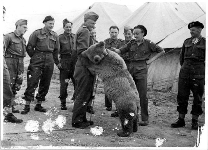 Krakow to erect statue honouring WWII hero Wojtek the Bear  - http://www.warhistoryonline.com/war-articles/krakow-erect-statue-honouring-wwii-hero-wojtek-bear.html