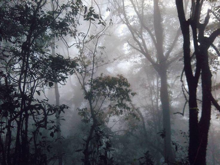 """#hiking #hikingjabar #gunungmanglayang"""