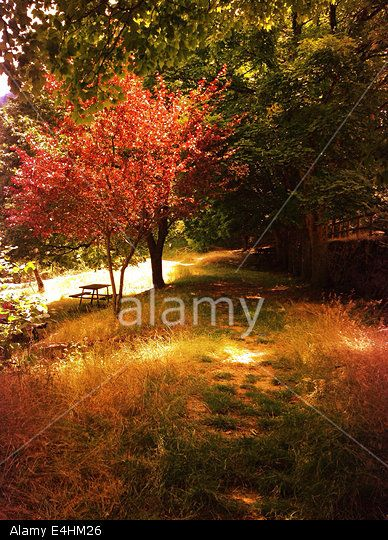 Fall Forest Stock Photo, Picture and Royalty Free Image. Pic. 71689022