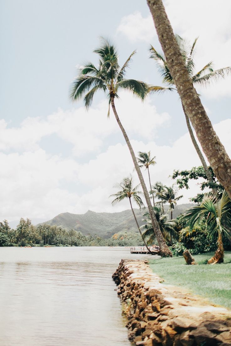 Palm tree heaven || We will stay forever.