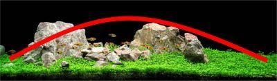 Aquascaping Principles: convex set-up