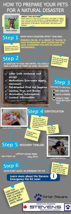 A illustration depicting steps to prepare your pet(s) for a natural disaster