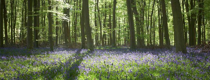 Forest Holidays :: UK Short Breaks 2016/2017 in England & Scotland