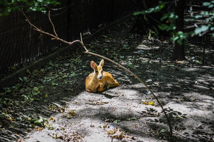 Gradina Zoologica din Szeged  Gradina Zoologica din Szeged : o padure cu animale multe - galerie foto.  Vezi mai multe poze pe www.ghiduri-turistice.info