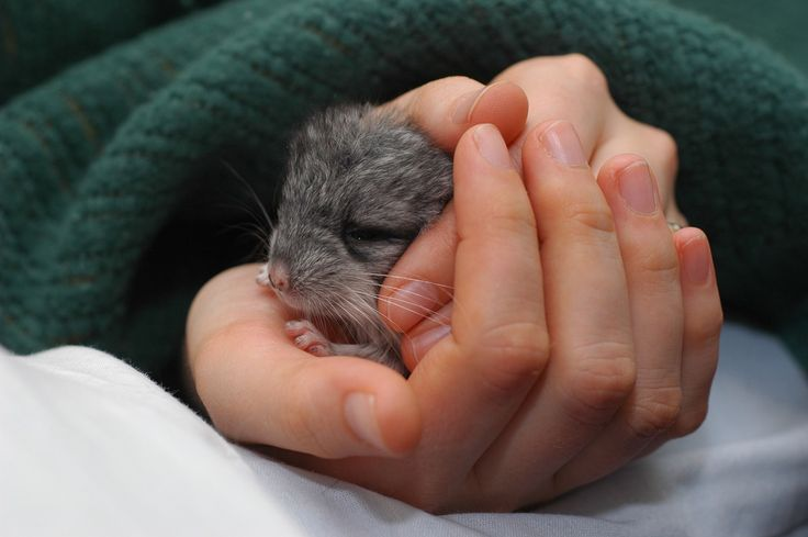 <b>We have a planet full of baby animals, so you should never be TOO sad.</b>