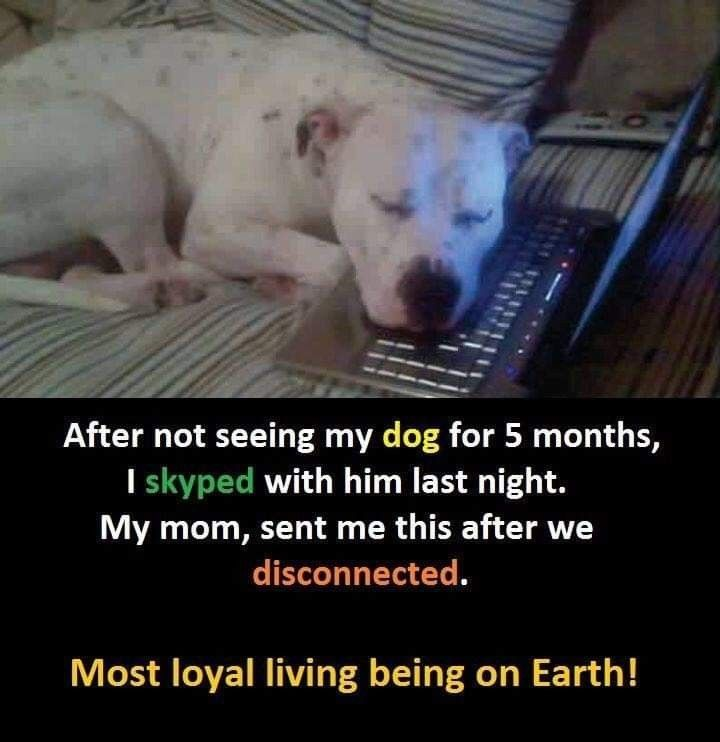 Pin By Mildred Hodge On Love Dogs In 2020 Dogs Pet Dogs Puppies Pet Dogs