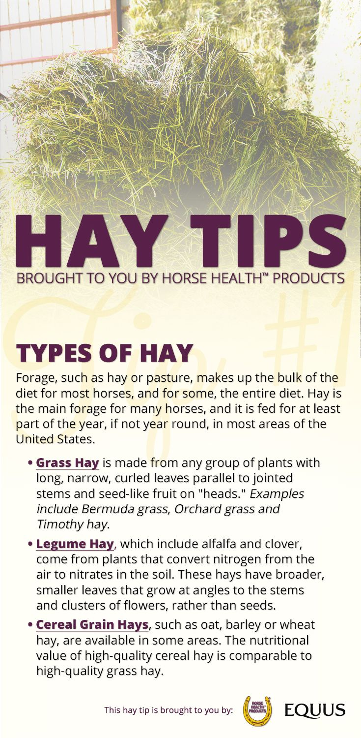 If you own a horse, you've probably discovered that when you ask about the best hay to feed, you never get a simple answer. Some horses may require higher protein and more energy, while others may need hay that is not as rich. So here are some tips to help you decide which hay type may be best to feed your horse >>http://bit.ly/EQ-Winter-Hay-Sweepstakes