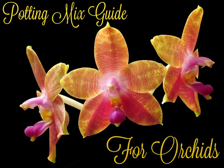 Orchid Care Growing and Caring for Orchids Indoors amp Out