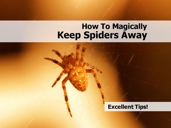 1000 images about garden remedy on pinterest gardens for Home remedies to keep spiders away