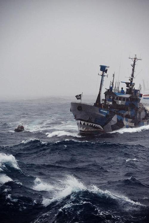 Sea Shepherd : un de ses navires amiraux luttant contre les braconniers des mers et contre les gouvernements corrompus.