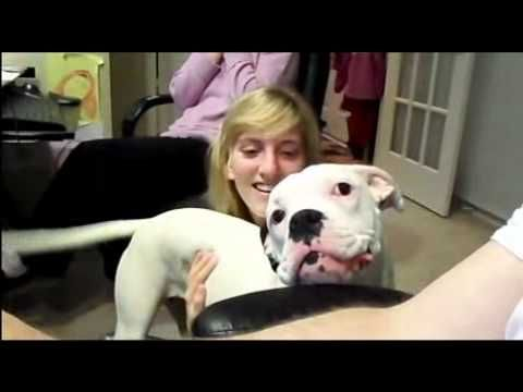 Funny Boxer Puppy Dog Talking to Dad - Reminds me of some boxer I know...