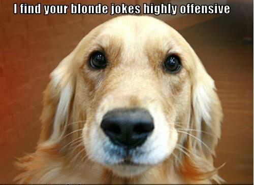 Blonde humor