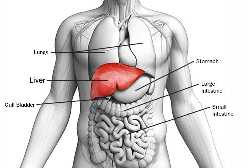 The anatomy of liver cancer