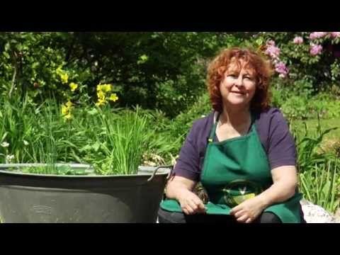 Die besten 25 miniteich ideen auf pinterest wasserspiel for Gartenteich aus reifen