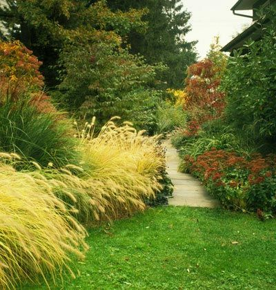 30 best hot tub and pool privacy grass images on pinterest for Hardy ornamental grasses