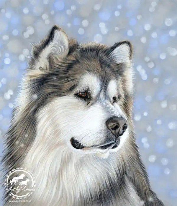 Pin De Arte Essencial En Caes Fotos De Perros Lindos Fotos De Perros Perro Alaska