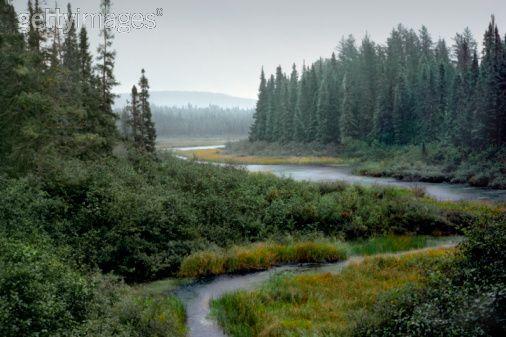 Spruce bog and boreal forest, Northwoods, Minnesota