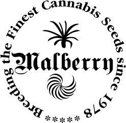Medical marijuanna seeds  http://www.malberry.net/