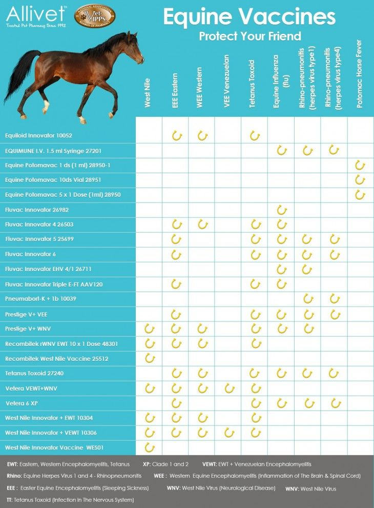 Horse 6 Way Vaccines 1000+ images about Hor...