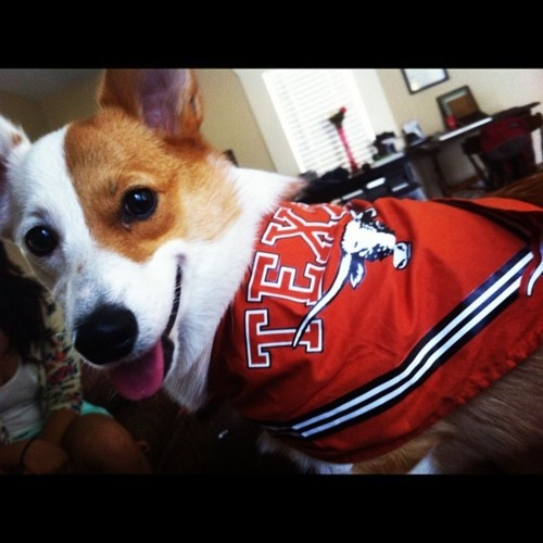 Enter our Pets with Pride photo contest by sharing a photo of your pet at facebook.com/texasexes!: Stuff Hook Em, Longhorn Pets, Photo Contest, Hookem Longhorns, Longhorns Puppy, Orange Stuff Hook, Pride Photo, Friend