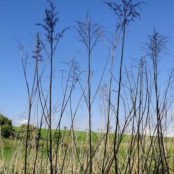 #trawy #iwystarczy#grass