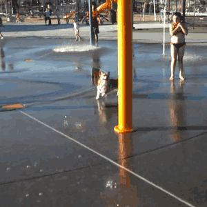 The corgi who would win every wet T-shirt contest but would never enter because she respects herself. | 51 Corgi GIFs That Will Change Your Life