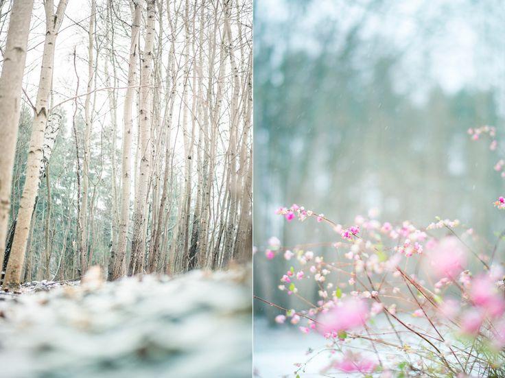 Skog. Love winter.