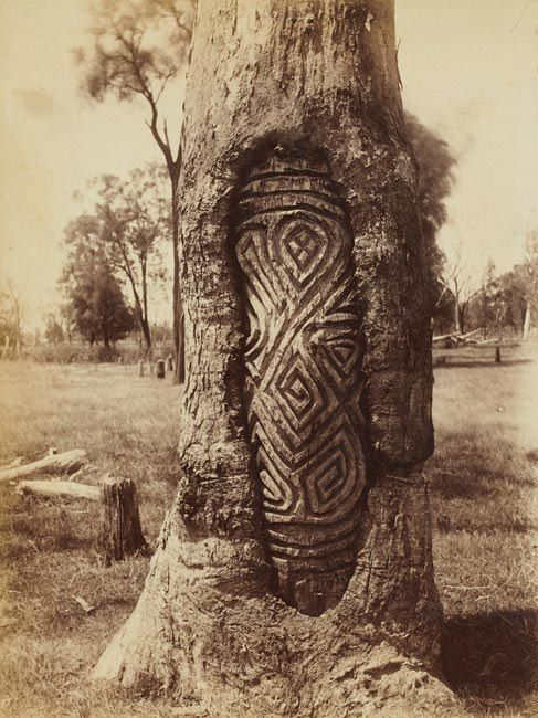 "A Wiradjiri dendraglyph or tree carving - these ancient designs were only used by the Wiradjiri and Kamilaroi people of NSW (the two largest language groups in Australa).  Roger Knox, a Kamilaroi man brought up by my mother, told me these trees were often used as sign posts providing information of tribal movements and where to find resources such as food and water..  White anthropologists regarded these trees as burial markers for important ""kings"" or tribal elders.."