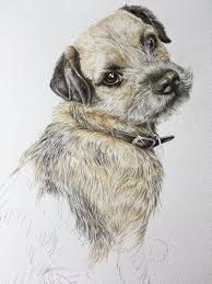 Image result for drawing border terrier