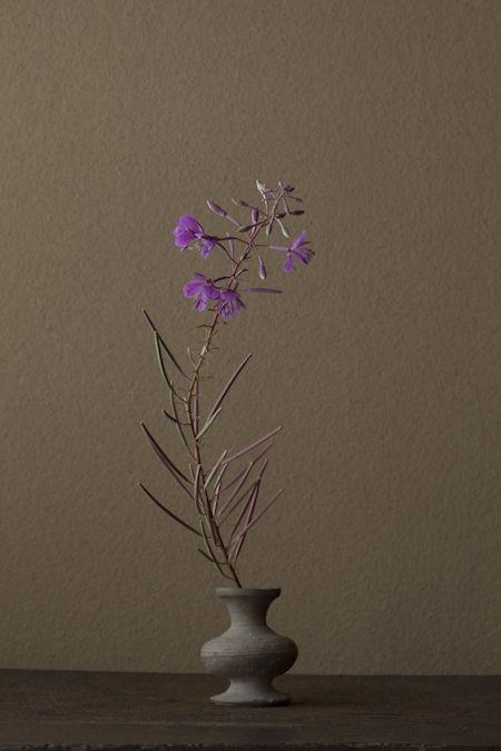 花:柳蘭(ヤナギラン) 器:須恵器壺(古墳時代)花:柳蘭(ヤナギラン) 器:須恵器壺(古墳時代,300~500 AD.)川瀬敏郎 Toshiro Kawase