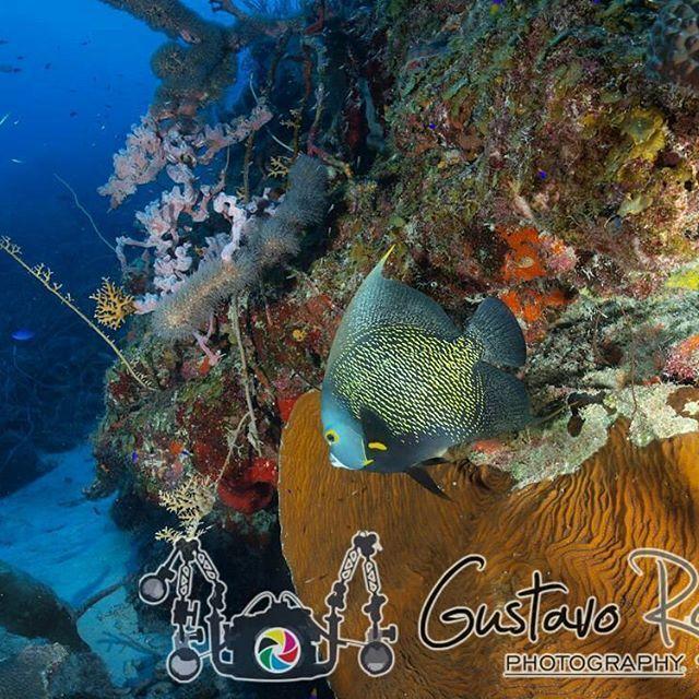 Las 25 mejores ideas sobre pez angel en pinterest y m s for Pez cachama