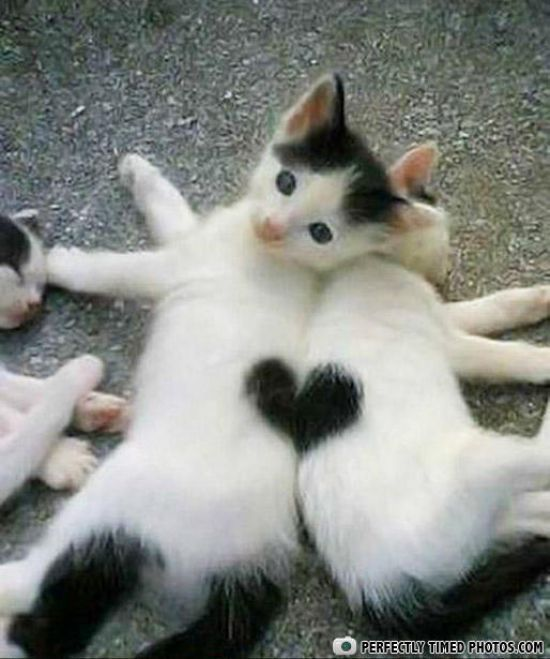 Kittens with hearts :3 oh my goodness I feel like my heart might explode at the sight of these cuties...