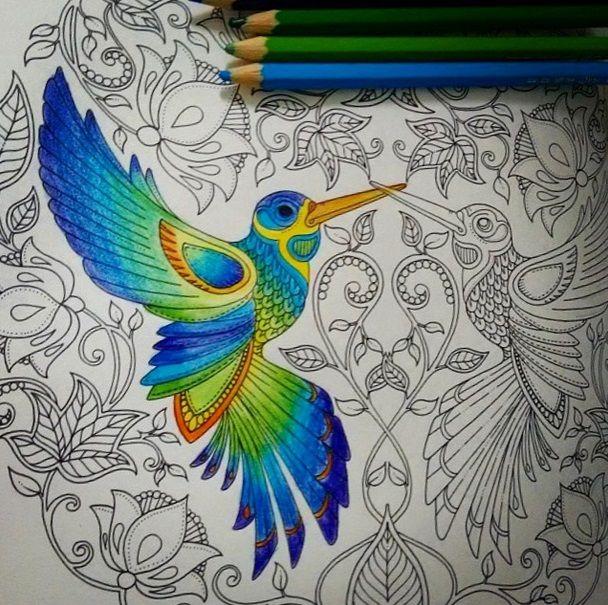 Secret Garden Book Crayon Art Adult Coloring Books Doodle Gardens Johanna Basford Pastel Crayons